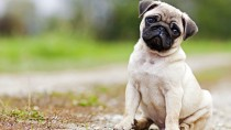 Small-Breed Dogs