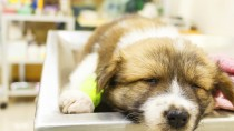 Anesthesia and Your Dog