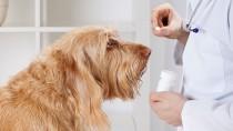 Vet giving a dog a pill