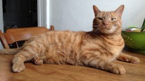 Aspirin Toxicity in Cats