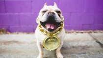 Ten Common Dog Insurance Myths