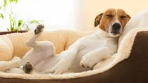 Flatulence: Why Does My Dog Smell?