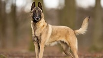 Hollywood's Impact on Dog Breed Popularity