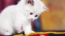 Kitten Care 101