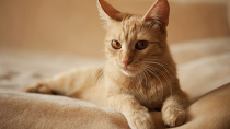 Mammary Tumors in Cats