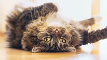 Cat laying on it's back