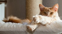 What Are Preventive Care Plans and How Can They Help Your Cat?