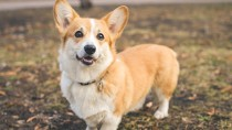 What Are Preventive Care Plans, and How Can They Help Your Dog?