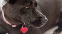 Surprising Do's and Don'ts for Pet Tags