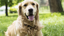 Ten Common Causes of Kidney Disease in Dogs