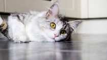 Why Does My Vet Want a Urine Sample from My Cat?