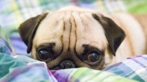 Understanding Vomiting in Dogs