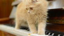 What Kind of Music Do Cats Like? New Study Offers Insights