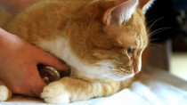 Reducing Cat Stress during Veterinary Visits