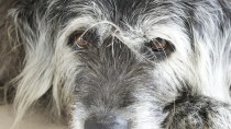 Senior Pets: Age Is Not A Disease