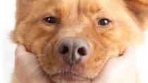What Should Dog Poop Look Like?