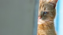 Tips for Getting Your Cat to the Vet
