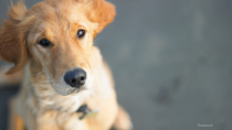 Top 10 Reasons To Spay Your Pet