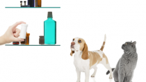 Tylenol Poisoning in Dogs and Cats
