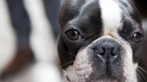Understanding Canine Hypothyroidism