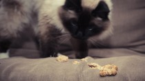 What Causes a Feline Hairball?