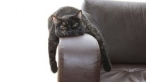 Cat feeling off laying on the couch