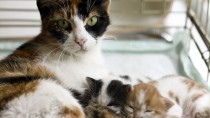 What to Expect When Your Cat is Pregnant