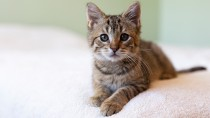 What Vaccines does My New Kitten Need?