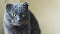 Your Cat and Retroviruses (FELV and FIV)