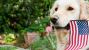 11 Pets Sound Off for Independence Day