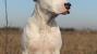 Courageous Dog Survives 9 Days Buried Under Tornado Wreckage