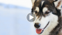 Dog Born with Deformed Front Legs Runs for the First Time