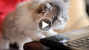 This Week's Top 7 Cutest (and Strangest) Viral Pet Videos