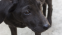 Stray Dogs at Winter Olympic Games in Sochi Overshadow Opening Ceremony