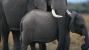 Wildleaks: New Whistleblowing Website Aims to Cut Wildlife Crime