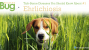 Ehrlichiosis in Dogs