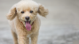 10 Questions to Ask Your Veterinarian about Gastric Dilatation-Vulvulus: Bloat