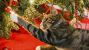 Cat and Dog Holiday Care