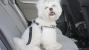 Choosing a Dog Harness for the Car