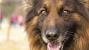 Dog Hair Sheds Light On Hormonal Disease