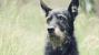 senior dog nearing end-of-life
