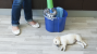 Household Cleaning Products and Your Pet: What You Should Know About
