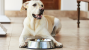 Hypercalcemia in Dogs
