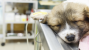 Minimally Invasive Surgery for Dogs and Cats