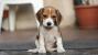 The New Puppy Checklist