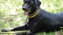 Insecticides, flea collars, and your dog