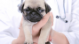 5 Things Veterinarians Can Learn from Dog Poop