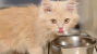 7 Tips and Tricks to Keep Your Growing Kitten Eating Right