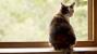 Heartworm Disease: Cats Get it Too