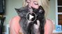 Household Safety Tips for New Kitten Parents